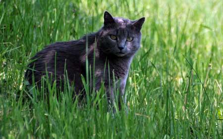 Tupavi mačak Marko