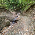 Hiking Fruška Gora – izletište Brankovac